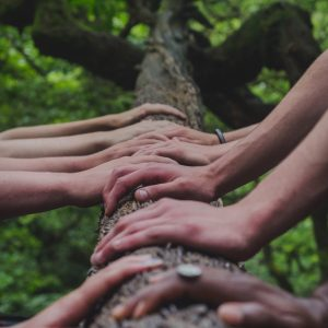 Hands on Tree by Shane Rounce